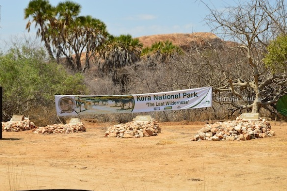 George Adamson's burial place inside the Kora National Park; He's buried beside his brother Terrence and Supercub, (Terrence's favourite lion) and his own favourite, Boy.