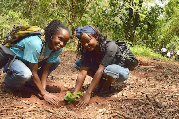 Restoring mother nature, one tree at a time